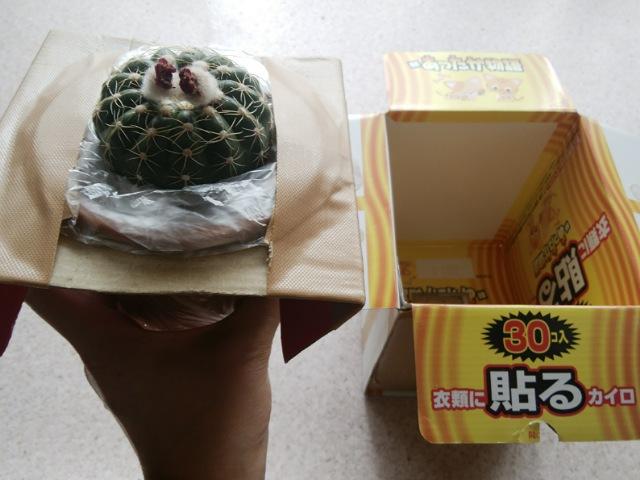 植物を箱に入れる