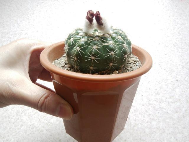 まずは植物の全体像