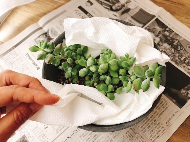 鉢植え梱包1