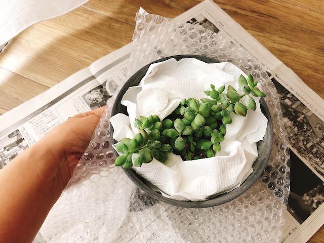 鉢植え梱包2