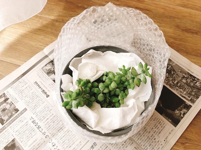 鉢植え梱包2−2