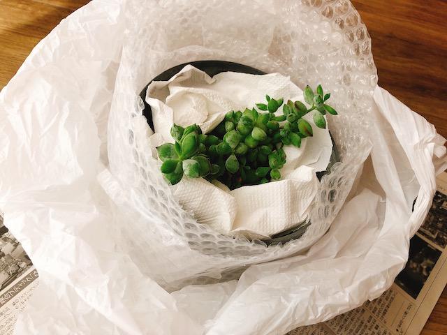 鉢植え梱包3−1
