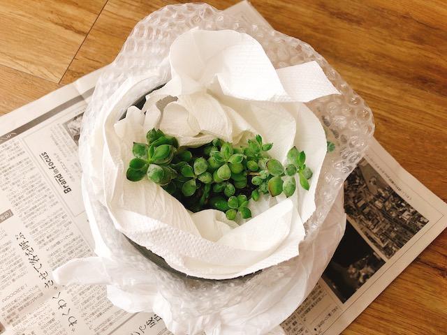 鉢植え梱包3−3